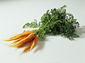 A bunch of carrots against a white background