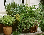 Various herbs in basket and pots