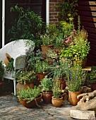 Terrace with garden herbs in pots