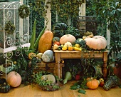Still life with pumpkins, squashes and bird cage