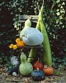 Herbstliche Gartendekoration mit Kürbissen