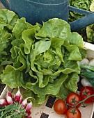 Freshly picked salad vegetables in crate