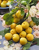 Still life with yellow plums and white roses