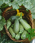 Courgettes, variety 'Verte d'Alger'