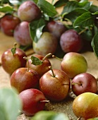 Greengages, variety 'Graf Althan'