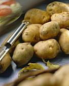 Potatoes, variety 'Eigenheimer'