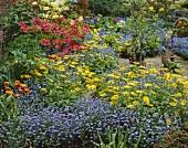 Sea of summer flowers