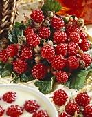 Thimbleberries (Rubus parvifolius)