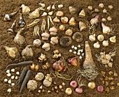 Various flower bulbs lying on soil