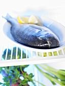 Sea bream in a refrigerator