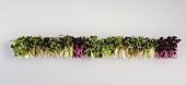 Sprouts: red cabbage, rocket, cress, radish, alfalfa, broccoli