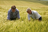 Two farmers inspecting a field of barley