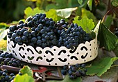 Black grapes in a metal container with vine leaves