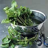 Watercress in a bowl of water, scissors