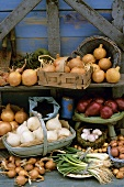 Various types of onions out of doors