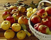 Still life with various old apple varieties