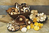 Still life with assorted mushrooms