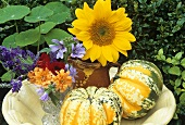 Autumn still life of pumpkins and flowers out of doors