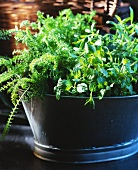 Container of herbs