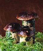 Pilze aus Geflügelröllchen mit Farce und Petersilie, Pilzhut
