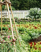 A vegetable bed