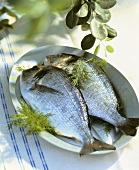 Two fresh sea bream on plate