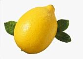 Eine Zitrone vor weißem Hintergrund