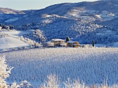 Snow-covered vineyards in Tuscany, Italy