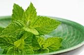 Fresh mint in a green dish