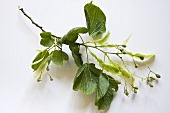 A lime sprig
