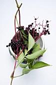 Elderberries on a bowl