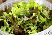 Mixed lettuce leaves in a plastic colander