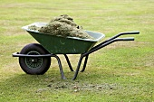Grass cuttings in a wheelbarrow