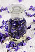 Tincture of sweet violet
