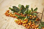 Sea buckthorn with leaves on a wooden surface