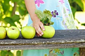 A girl placing green apples on a garden bench