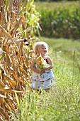 Blondes Mädchen mit Maiskolben neben einem Maisfeld