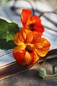 Nasturtium flowers on a book