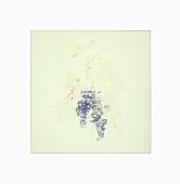 Grapes sunken in white