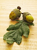 Acorns and an oak leaf