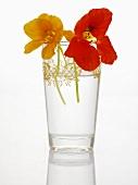 Nasturtium flowers in a glass of water