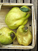 Three quinces in a wooden basket