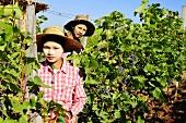 Junge Arbeiter in asiatischem Weinberg
