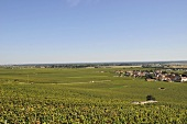 The commune of Vove Romanee with vineyards