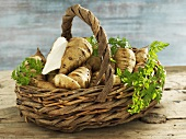 A basket of parsnip chervil