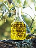Olive oil on an olive tree stump