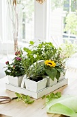 Fresh herbs and flowers in a carrying basket on a kitchen window sill