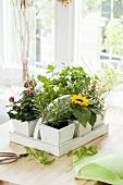 Frische Kräuter und Blumen im Tragekorb am Küchenfenster