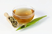 Cup of ribwort plantain tea and ribwort plantain