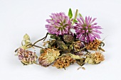Red clover, fresh and dried